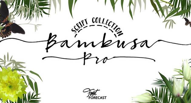 Nature And Plant Fonts Bambusa