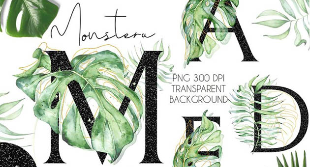 Nature And Plant Fonts Montera